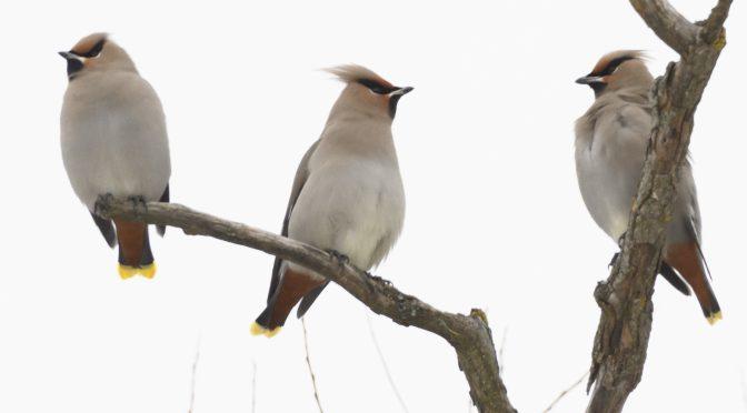 Biggish Bird Year – Mission complete