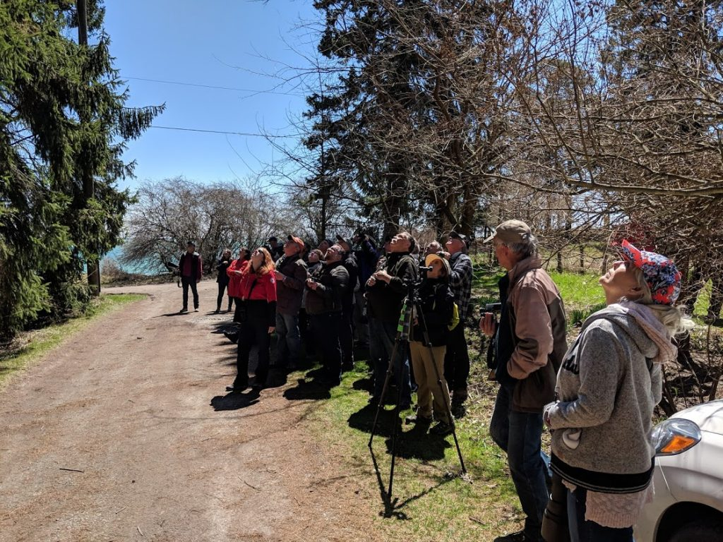 Large crowd of birders looking at a very small bird