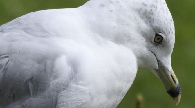 Exposure compensation: Don't Blow Up Your Gulls