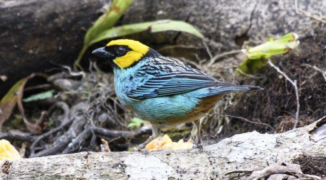 Ten Great Birding Moments of 2019