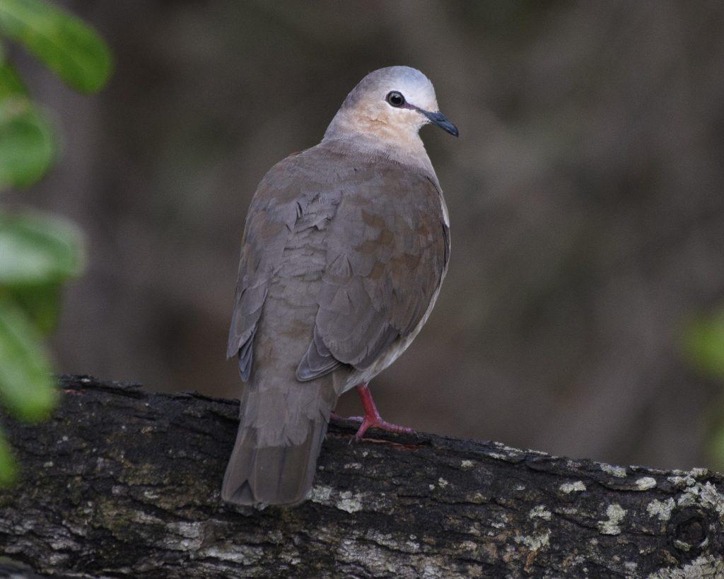 Rain forest birding in Mitú