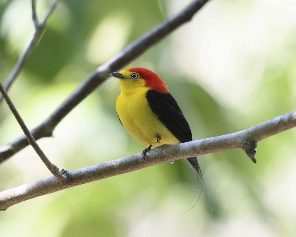 Birding Colombia's Llanos
