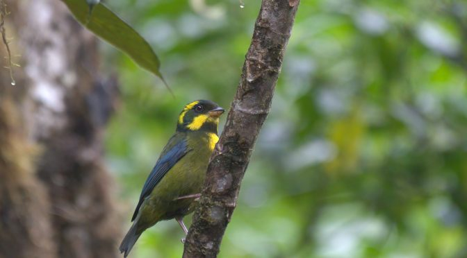 Wikipedia – Lockdown Bird Highlights #3